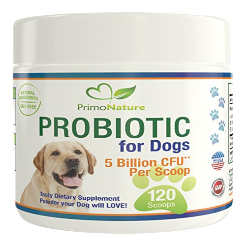 Best Food For Dogs With Yeast Allergies